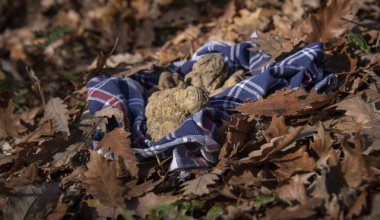 What is the truffle? Four curiosities about the King of mushrooms