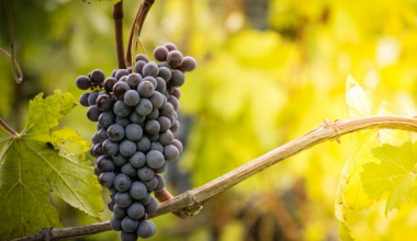 """All the """"nebbiolo"""" of Langhe and Roero"""